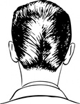 haircut,rear,view,hair,barbering,portrait,head,media,clip art,externalsource,public domain,image,png,svg