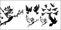 black,white,dove,silhouette,vector,material