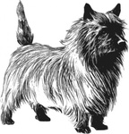 cairn,terrier,greyscale,animal,mammal,pet,dog,biology,zoology,line art,outline,contour,media,clip art,externalsource,public domain,image,svg,wikimedia common,psf,wikimedia common,wikimedia common,wikimedia common