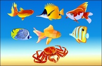 fish,crab,animal,sea,flounder,trout,gold,hermit,underwater,animal,animal,animal,animal,animal