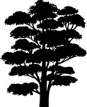 tree,silhouette,nature,element,illustration.black,shadow,shape,media,clip art,public domain,image,png,svg,silhouette,design,element,silhouette,element