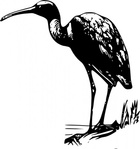 glossy,ibis,media,clip art,public domain,image,svg,fws,fws lineart,line art,bird,glossy ibis,plegadis falcinellus,plegadis,falcinellus
