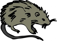 mouse,rodent,ainmal,mammal