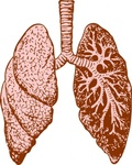 lung,anatomy,body,human,media,clip art,externalsource,public domain,image,png,svg,lung,lung,lung,lung