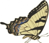 butterfly,papilio,turnus,side,view,media,clip art,externalsource,public domain,image,svg,png