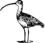 standing,bird,billed,remix,completed request,fws,fws lineart,line art,long,billed curlew,curlew,numenius americanus,clip art,media,public domain,image,svg