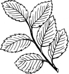 leaf,nature,plant,tree,branch,biology,botany,line art,media,clip art,externalsource,public domain,image,png,svg,wikimedia common,psf,wikimedia common,wikimedia common,wikimedia common