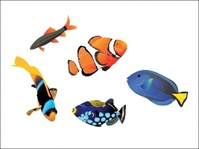 saltwater,fish,wallpaper,koi,goldfish,under,sea,design,the,design