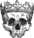 king,dead,skull,crown,etching,line art,engraving,contour,black & white