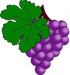 grape,vine,leaf
