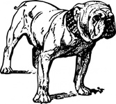 bulldog,animal,mammal,pet,dog,biology,zoology,line art,black and white,contour,outline,media,clip art,externalsource,public domain,image,png,svg,wikimedia common,psf,wikimedia common,wikimedia common,wikimedia common