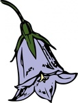 harebell,nature,flower,plant,season,summer,autumn,media,clip art,externalsource,public domain,image,png,svg