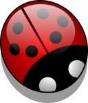 ladybug,colour,animal,insect,bug,beetle