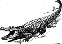 alligator,animal,reptile,biology,zoology,line art,black and white,contour,outline,media,clip art,externalsource,public domain,image,png,svg,wikimedia common,psf,wikimedia common,wikimedia common,wikimedia common