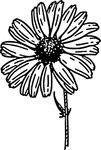 daisy,nature,plant,flower,aster,biology,botany,gardening,line art,season,spring,black and white,contour,outline,media,clip art,externalsource,public domain,image,png,svg,wikimedia common,psf,wikimedia common,wikimedia common,wikimedia common