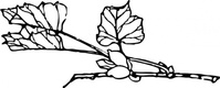 branch,flower,tree,plant,media,clip art,externalsource,public domain,image,png,svg