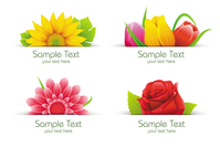 banner,collection,colorful,flower,green,leaf,nature,rose,set,sun,sunflower,text,tulip