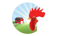 rooster,chicken,barn,barnyard,farm,animal