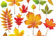 maple,leaf,background,brown,orange,nature,element,autumn,natural