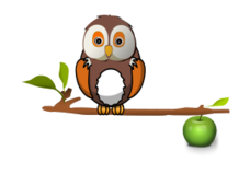 owl,branch,tree,apple
