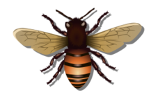 bee,insect,fly,honey,pain,bite,honeycomb,realistic,wing,wing,photorealistic