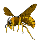 hornet,brown,yellow