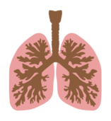 lung,biology,anatomy,human,body,science,silhouette,lung