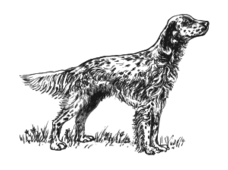 animal,mammal,pet,dog,biology,zoology,grayscale,outline,line art,externalsource,wikimedia common,psf