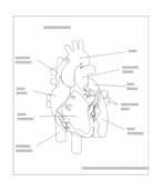 media,clip art,unchecked,public domain,image,png,svg,human heart,medical,anatomy