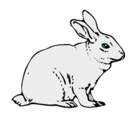 media,clip art,public domain,image,png,svg,animal,mamal,farm,bunny,rabbit,white