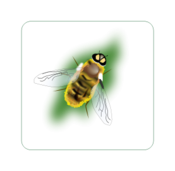 media,clip art,public domain,image,png,svg,bee,insect,nature,animal,hornet