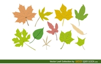 nature,natural,leaf,leaf,maple,pine,object,vector
