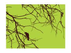 dead tree,branch,silhouette,bird,tree,green,brown,halloween,twig,stick