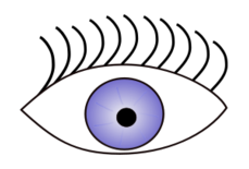 media,clip art,public domain,image,png,svg,people,anatomy,face part,body part,eye